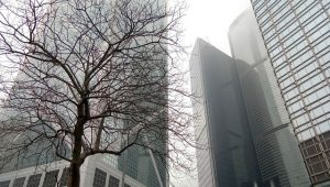 buildings and a tree